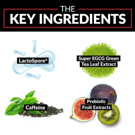 ProbioSlim Ingredients